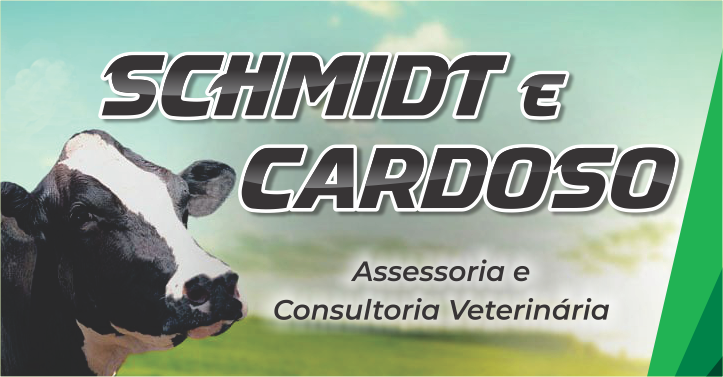 Schmidt e Cardoso - Cartões ok