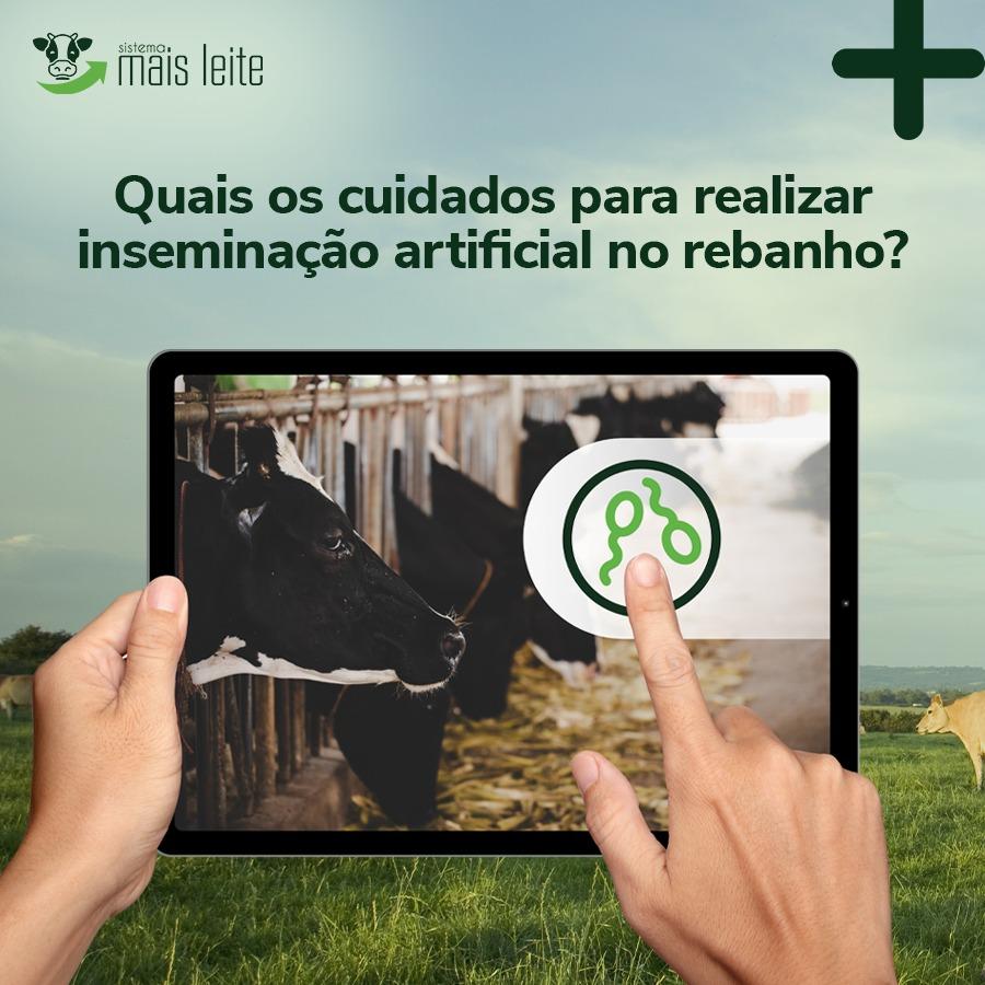Inseminação de bovinos